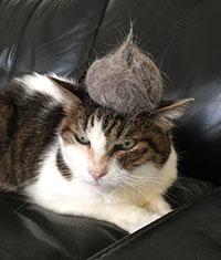 猫次郎(ねこじろう)さん